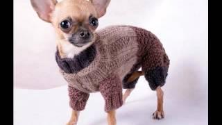 купить одежду для собак в тюмени