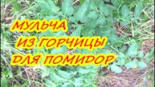 МУЛЬЧА ИЗ ГОРЧИЦЫ ДЛЯ ПОМИДОР / Органическое земледелие