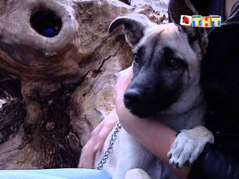Собака клиника
