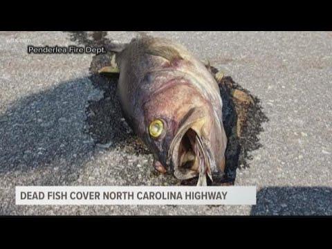 Dead Fish Found Covering I-40 in North Carolina