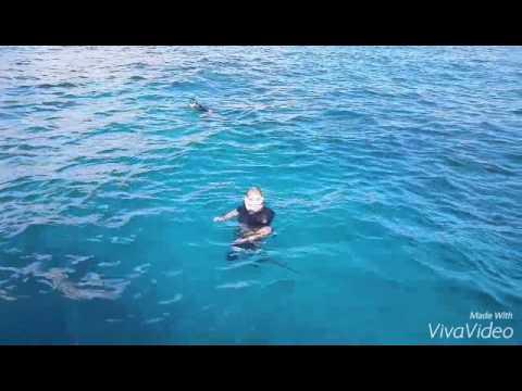 Kailua Beach Snorkeling In Waikiki