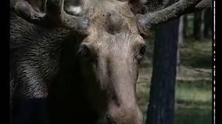 04  Сохранение количества и разнообразия животных