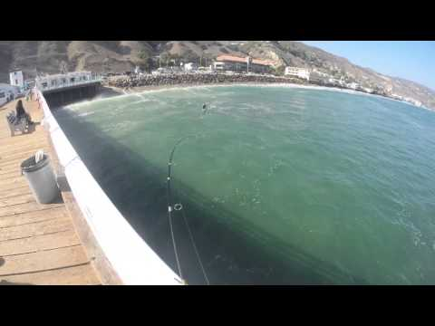 Malibu Pier White Seabass