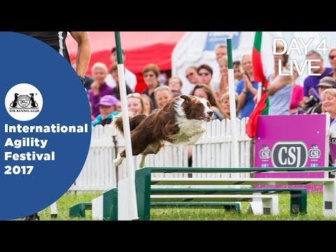 DAY 4 LIVE | International Agility Festival 2017
