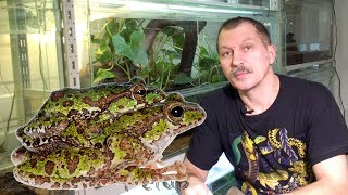 видео Знакомимся: аквариумные лягушки