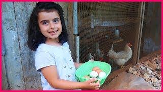 Babannemizin Kümesinin İçine Girdik, Tavuklara Yem Verdi l Eğlenceli Çocuk Videosu