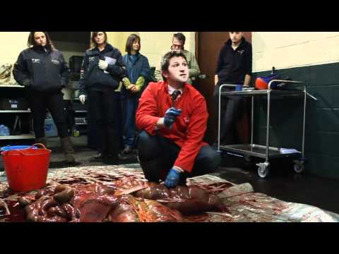 Balanced Horse Feeds Equine Digestive System Dissection HD (Full Version)