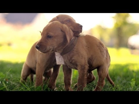 Cute Puppy Race in 4K (ULTRA HD)