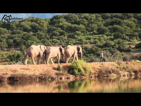 Oudtshoorn Elephant Company - Elephant Experiences in Oudtshoorn, South Africa