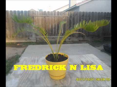 FREDRICK N LISA