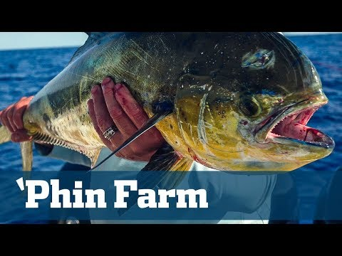 'Phin Farm - Florida Sport Fishing TV