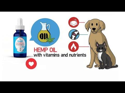 dog-cbd-oil-treats