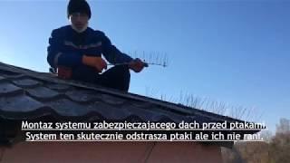 System zabezpieczający dach budynku przed ptakami