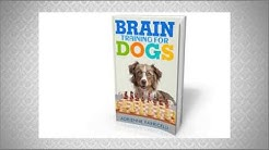 Dog trainer courses - how to become a dog trainer