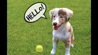 I taught my Dog How To Say Hello