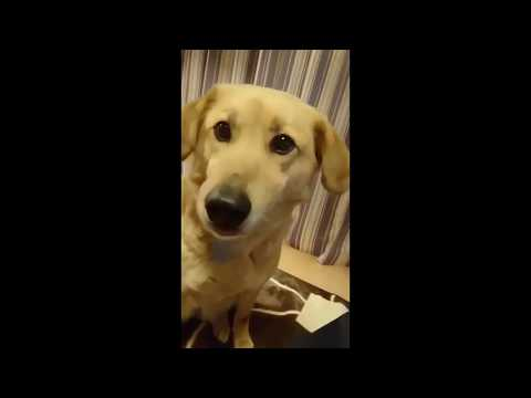 This dog is thinking hard about his next move (Pet humor)