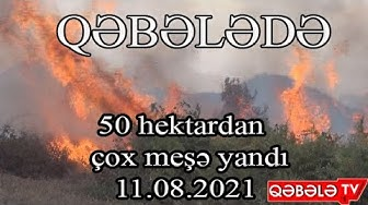 QƏBƏLƏDƏ GÜCLÜ MEŞƏ YANĞINI - QƏBƏLƏ TV