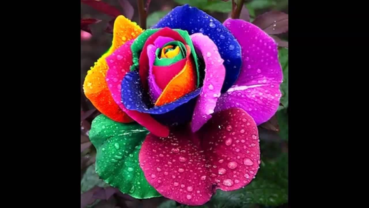 Удивительно красивые цветы и музыка для отдыха - YouTube