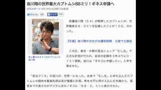 俳優哀川翔(54)が飼育したカブトムシが、世界最長88・0ミリを記...