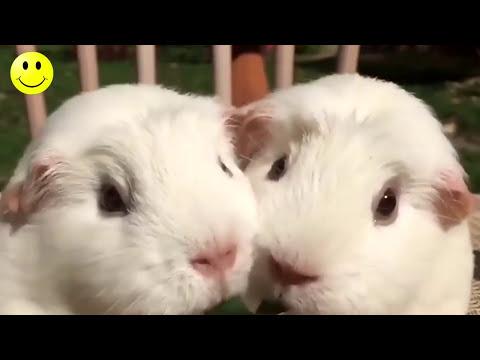Smeh do Suza - Lude i Smešne Životinje - Smešno do Bola 2017 #6