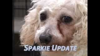 An Update On Sparkie The Puppy Mill Survivor!