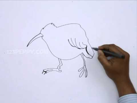 How To Draw A Kiwi Bird Youtube
