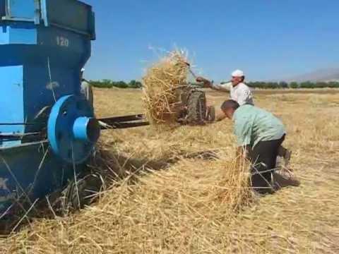 Doğanyol İlçesi  Yaz Ayı Arpa Buğday Zamanı  Patoz Yapılırken