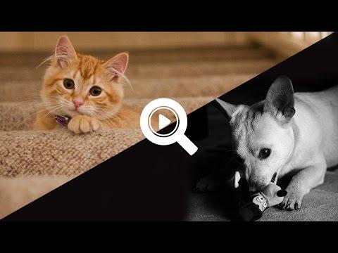 сайт знакомств для кошек