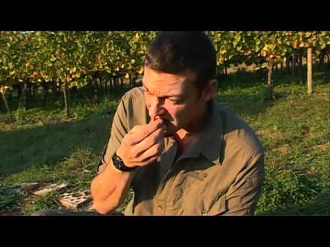 Outdoor-Survival 10: Herbsternte 2