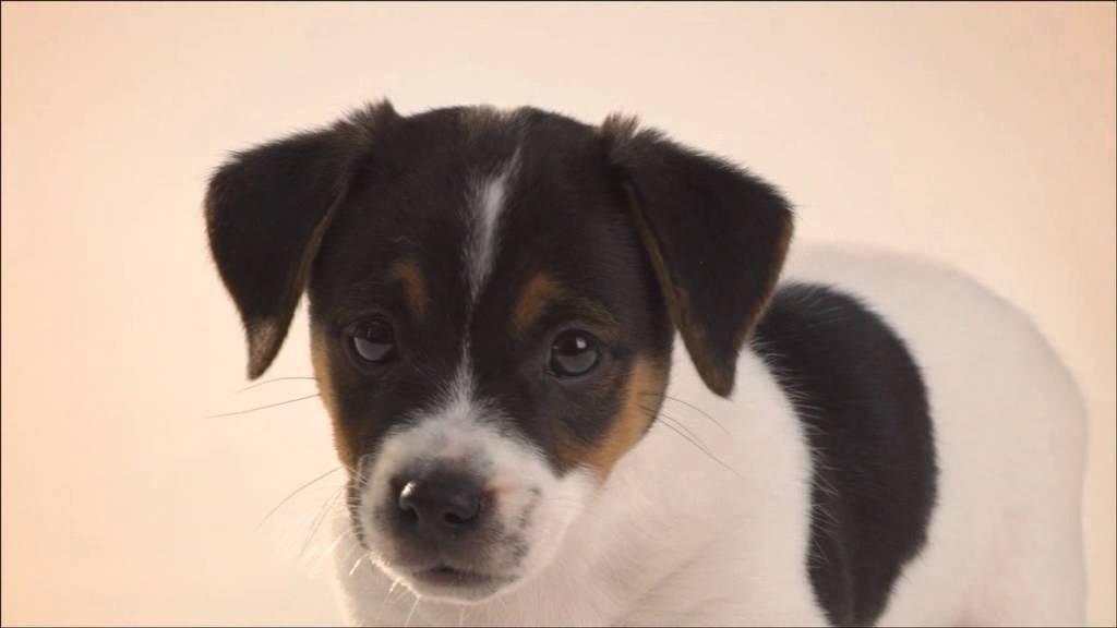 Comida para chachorros 1 12 meses perros razas peque as youtube - Comida para cachorros de un mes ...