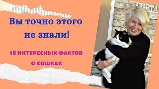 ✅Вы точно этого не знали!18 интересных фактов о кошках.