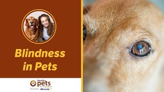 Dr. Becker Discusses Blindness in Pets