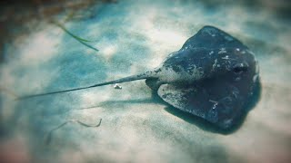 how-the-stingray-shuffle-could-keep-you-from-getting-stung