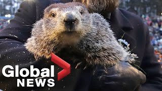 Courtesy: commonwealth of pennsylvania / cable networkthousands gather at gobblers knob in punxsutawney, pennsylvania, as phil the groundhog mak...