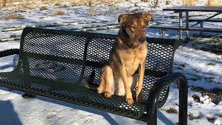 Zoe 2.5 Yo Husky/Shepherd Mix - Dog Training Omaha Nebraska, Off Leash Dog Training