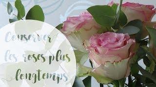 Comment conserver un bouquet de roses plus longtemps