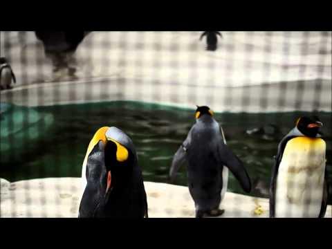 Penguins at Tennoji Zoo, Osaka