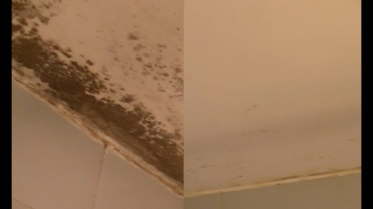 Como quitar las manchas de humedad de las paredes - Quitar humedad pared ...