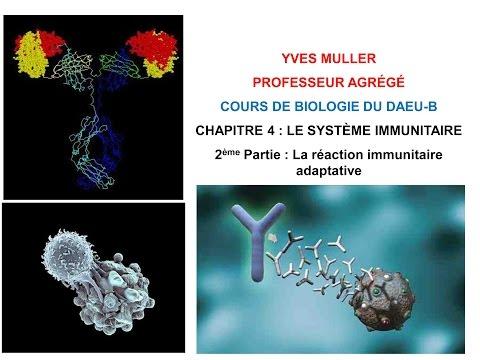 Chapitre 4 - 2ème Partie : La réaction immunitaire adaptative - Cours de Biologie du DAEU-B