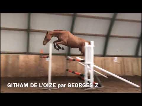 GOTHAM DE L\'OIZE Z