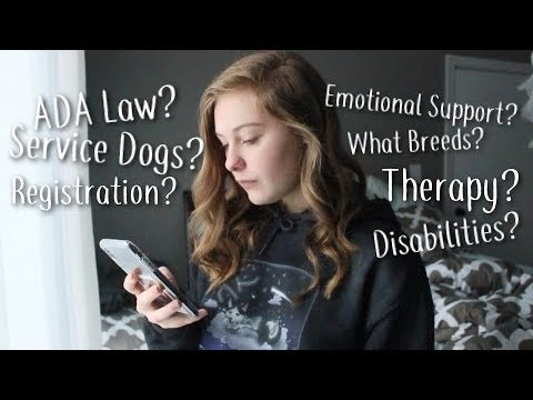 What You Should Know About Service Dogs