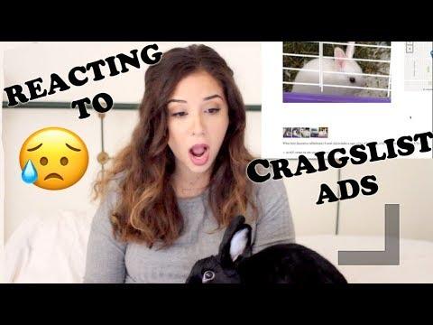 REACTING TO RABBIT ADS ON CRAIGSLIST