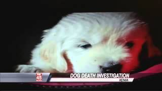 Death Of Puppy At Service Dog Training Facility May Be Linked To Deadly Dog Virus