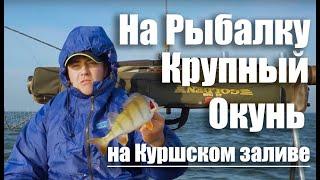Ловля окуня/ Как поймать окуня на Куршском заливе/ На рыбалку