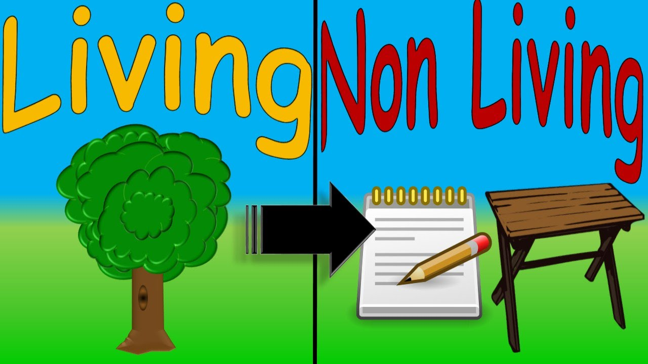 Living and non living things for kids cosas vivas y no vivas en youtube premium ccuart Images
