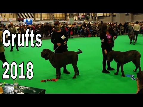 Vlog #7 Crufts 2018 - Neapolitan Mastiff Puppy Junior Wins!