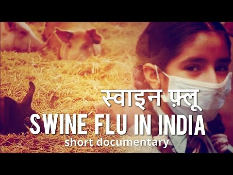 Swine Flu in India - Hindi Documentary - Cause, Symptoms and Remedy