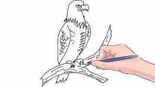 How to Draw an Eagle Easy Step by Step