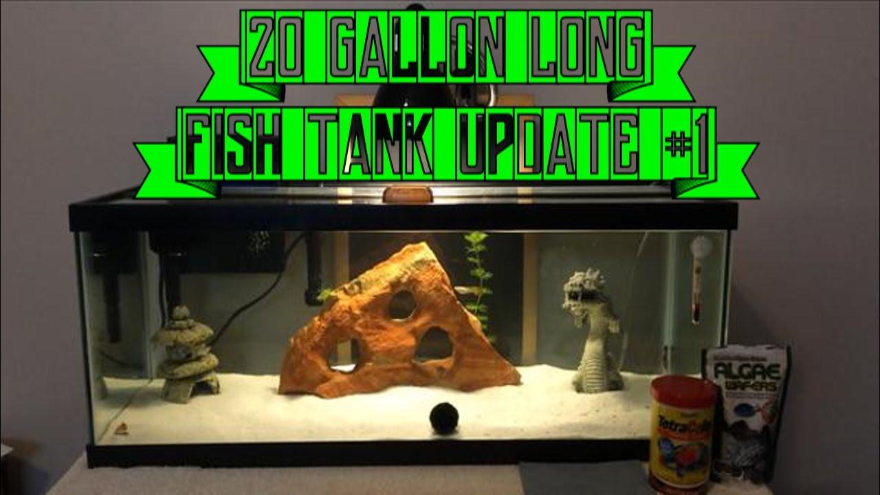 Fish aquarium update 1 my 20 gallon long aqueon tank set for How long is fish good for