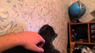 Мой кот Феликс видит кого-то